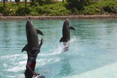 Delfino all'hotel di Atlantide Fotografie Stock Libere da Diritti