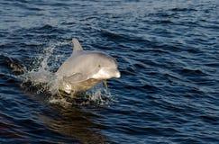 Delfino allegro Fotografie Stock Libere da Diritti