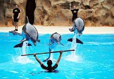 Delfino che gioca con la gente fotografia stock