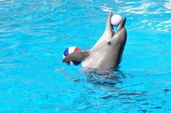 Delfino che gioca i beach ball Immagine Stock