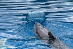 Delfino con lavaggio delle bottiglie di plastica il mare immagine stock libera da diritti
