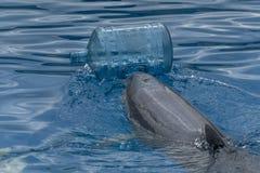 Delfino con lavaggio delle bottiglie di plastica il mare fotografia stock libera da diritti