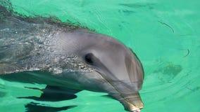 Delfino dai Caraibi Fotografie Stock Libere da Diritti