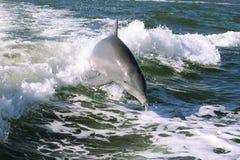Delfino del bambino Immagini Stock Libere da Diritti