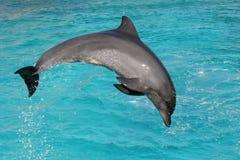 Delfino del radiatore anteriore della bottiglia Immagine Stock Libera da Diritti