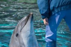 Delfino di Bottlenose con l'istruttore nel Giappone Immagini Stock Libere da Diritti