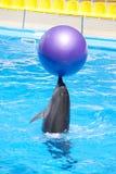 Delfino di Dancing Immagini Stock Libere da Diritti