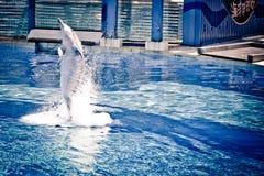 Delfino di salto Immagini Stock