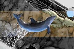 Delfino di salto Immagine Stock Libera da Diritti