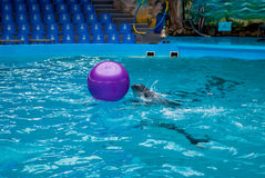 Delfino e palla Fotografie Stock Libere da Diritti