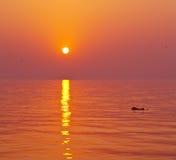 Delfino ed il tramonto Fotografie Stock Libere da Diritti