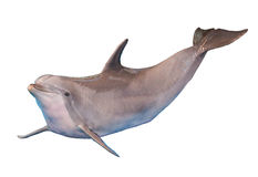 Delfino isolato Immagine Stock