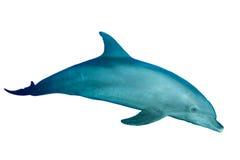 Delfino isolato sopra mentre Immagine Stock Libera da Diritti