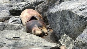 Delfino morto sulla spiaggia immagine stock libera da diritti