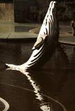 Delfino nella sosta Fotografia Stock