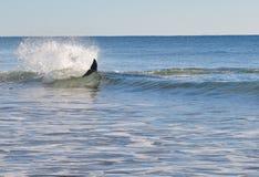 Delfino nella spuma Fotografia Stock