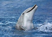 Delfino, radiatore anteriore in bottiglia Immagini Stock