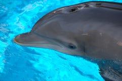 Delfino in raggruppamento al miraggio Fotografie Stock