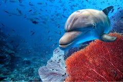 Delfino subacqueo sul fondo blu dell'oceano fotografia stock libera da diritti