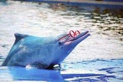 Delfino sveglio Fotografia Stock Libera da Diritti