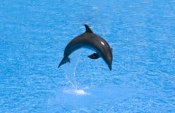 Delfino in un salto Fotografie Stock