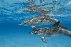 delfinpar skvalpade Arkivfoto