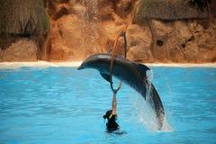 Delfinshow Fotografering för Bildbyråer