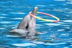 Delfinshow Arkivfoton