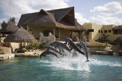 Delfinshow Royaltyfria Foton