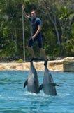 Delfinshow i havsvärlden Gold Coast Australien Arkivfoto