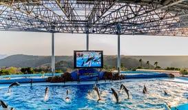 Delfinshow i pölen Arkivfoto
