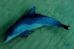 Delfinsimning i havet Arkivbild