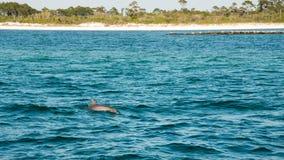 Delfinsimning med fartyget royaltyfri fotografi