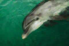 delfinstående Royaltyfria Bilder