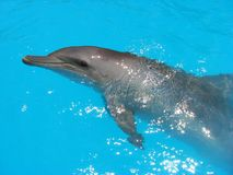 delfinturkosvatten Fotografering för Bildbyråer