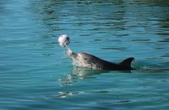 Delfinu bawić się zdjęcia stock