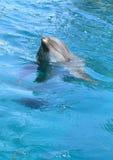 Delfinu cleaning woda Zdjęcie Royalty Free