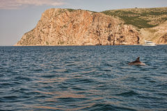 delfinu czarny morze Obraz Stock