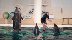 delfinu dolphinarium przedstawienie zdjęcie stock