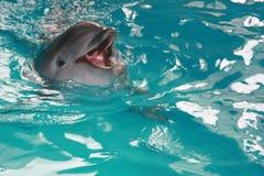 delfinu dopłynięcie Obrazy Stock