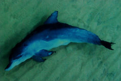 Delfinu dopłynięcie w morzu Fotografia Stock