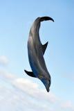 delfinu doskakiwanie Zdjęcie Royalty Free