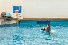 Delfinu doskakiwanie przez obręcza Obraz Stock
