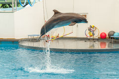 Delfinu doskakiwanie przez obręcza Zdjęcia Royalty Free