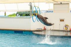 Delfinu doskakiwanie przez obręcza Zdjęcia Stock