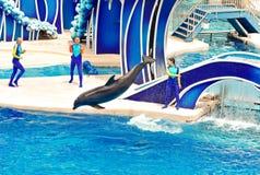 Delfinu doskakiwanie w basenie przy delfinów dniami Pokazuje obrazy stock