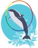 Delfinu doskakiwanie z wody przez obręcza mieszkania illustrati Fotografia Royalty Free