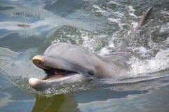 delfinu ja target565_0_ Obrazy Royalty Free