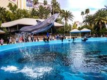 Delfinu latanie w powietrzu zdjęcie stock