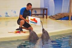delfinu malarz Zdjęcie Royalty Free